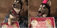 """Friend: wanna hangout tonight?  Me: can't, sorry  Friend: why?  Me: """"It's my dog's birthday"""" 😍 #Pets #Inspiration #CuteAlert"""