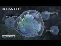 ▶ Améo Cell Active & Permeable Essential Oils - www.susanfreeland.myameo.com and  www.susanfreeland.myzija.com