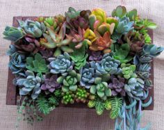 Framed Succulent Art - Bring your walls to life! Trendy, practically unkillable succulents don't mind growing in strange situations, and that includes being hung as art for your living room or patio walls. Succulent Frame, Vertical Succulent Gardens, Succulent Gardening, Succulent Arrangements, Planting Succulents, Container Gardening, Succulent Ideas, Succulent Planters, Artificial Succulents