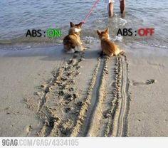 Explicación gráfica de lo que es el ABS (versión perritos) // ABS braking Explained (puppy version)