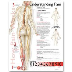 Acupuncture Pain Relief Understanding Pain anatomy poster defines the types of pain, lists symptoms for each and includes a pain scale. Pain Scale, Anatomy And Physiology, Pain Management, Massage Therapy, Massage Tips, Physical Therapy, Occupational Therapy, Chronic Pain, Back Pain