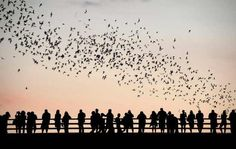 Bats take flight near Congress Bridge in Austin, TX. Silhouette FACE OF BIHAR FORM THE STREET PHOTO GALLERY  | BLOG.AAOBIHAR.COM  #EDUCRATSWEB 2020-03-14 blog.aaobihar.com http://blog.aaobihar.com/wp-content/uploads/2015/06/street-sleep-744x494.jpg