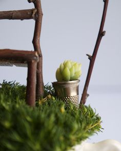 A thimble is the perfect size for a tiny potted plant in your miniature garden. via The Magic Onions