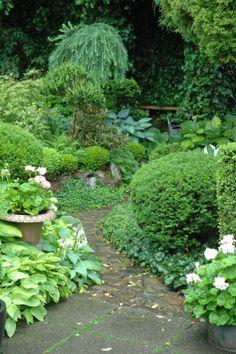 HAVETID: Stierne gennem haven.