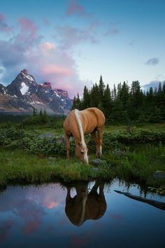 reminds me of my palomino mare, Shannon...never forgotten