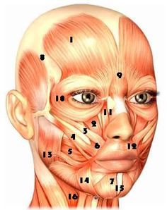 Face lifting exercises for the forehead, eyes, nose, cheeks, mouth, jowls, chin and neck. Free face exercise guide for every part of your face with videos!  #FaceLiftingExercises