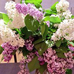 Ramo de lilas en #primavera #flores