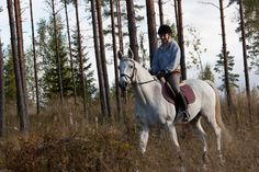#Equstom #ratsastus # maastoilu # horses Functional Training, Goats, Horses, Animals, Animales, Animaux, Animal, Animais, Horse