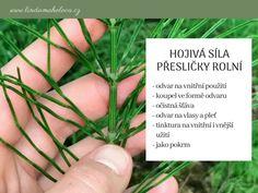 Přeslička rolní Herbs, Plants, Herb, Plant, Planets, Medicinal Plants
