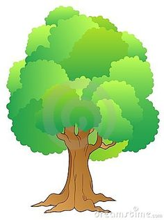Grand arbre avec la cime d arbre verte