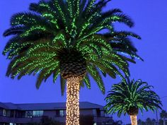 Palm Trees with Christmas Lights- This is our idea of a Christmas Tree! We love a great non-white Christmas! Palm Tree Christmas Lights, Palm Tree Lights, Holiday Lights, Palm Trees, Nautical Christmas, Outdoor Christmas, Christmas Themes, Christmas Fun, Christmas Decorations