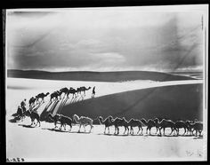 Merin leading camel caravan across the desolate dunes of Tsagan Nor in search of water, Mongolia, 1925 bt James B. Shackelford