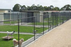 Dog Boarding Kennels...---Love the grass in the run