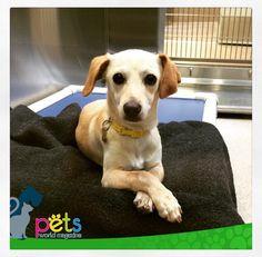 Buenas noches amig@s 🌝  #PetsWorldMagazine #RevistaDeMascotas #Panama #Mascotas #MascotasPanama #MascotasPty #PetsMagazine #MascotasAdorables #Perros #PerrosPty #PerrosPanama #Pets #PetsLovers #Dogs #DogLovers #DogOfTheDay #PicOfTheDay #Cute #SuperTiernos