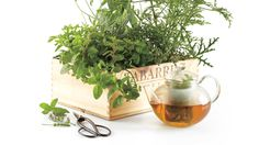 Tea garden in a box, via Martha Stewart