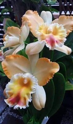 Beauty Of Orchids - Comunidade - Gardening Aisle