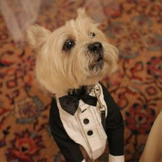 Such an adorable way to include a dog in your wedding :)