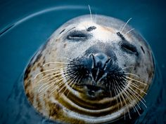 seal's KISSY FACE! :))