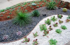 Using one type of succulent sparingly and sparsely in a planting bed with pebbles of contrasting colors you can create a beautiful rock garden with accent ...