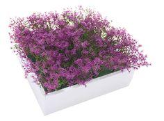Tableau végétal Floribox Fleurs Violettes