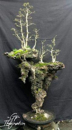 Jade Bonsai, Bonsai Wire, Bonsai Plants, Bonsai Garden, Indoor Fairy Gardens, Jungle Gardens, Bonsai Forest, Weird Trees, Indoor Bonsai Tree
