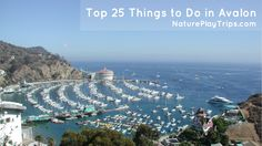 Top 25 Things to Do in Catalina (Avalon), including a same day trip itinerary