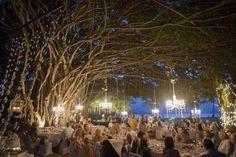 Port Douglas fig tree wedding rex smeal park