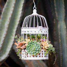 A madárkalitkába bújtatott pozsgások a legbájosabb új DIY-trend - NLCafé