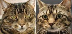 Rita vond haar vermiste kat Tijgertje dood langs de kant van de weg. Samen met de kinderen begroef ze poes in de tuin. Een week later kwam Tijgertje echter doodleuk de keuken in wandelen. Tijgertje Tijgertje was de hele week niet thuis gekomen.Rita had haar kinderen al op het ergste voorbereid. De cypersbruine poes bleef …