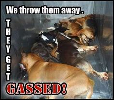 Craigslist posting: 'I put dogs in the gas chamber'