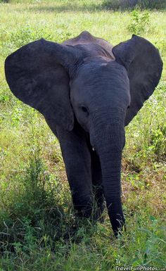 Baby Elephant in South Africa...........click here to find out more http://googydog.com