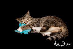 Turvy! Cat Photography - Kitten Photo Shoot