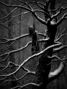 Are you, are you coming to the tree, where they hung a man they say murdered three?
