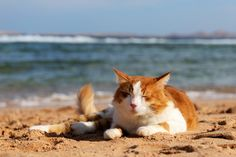 The Aardvark would love to spend the day at the beach with his friend The Cat