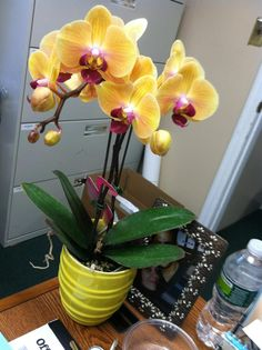 our yellow phaelonopsis orchids for our centerpieces!