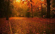 Sonbahar manzaraları