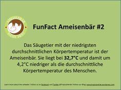 FunFact Tamandua   https://www.betterplace.org/de/projects/36425-ameisenbar-sucht-frau-werde-zum-wingman  #Regenwald #Rainforest #Tamandua #Ameisenbär #Anteater #AmeisenbärSuchtFrau #CostaRica #Naturschutz #Conservation #TropicaVerde #MonteAlto