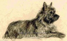 A Cairn Terrier ~ Dogs, Lucy Dawson ~ Cross Stitch Pattern…
