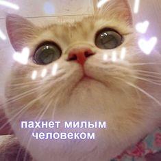 Cat Memes, Funny Memes, Cute Cat Wallpaper, Russian Memes, Text Jokes, Meme Stickers, Cute Love Memes, Cute Texts, Work Memes