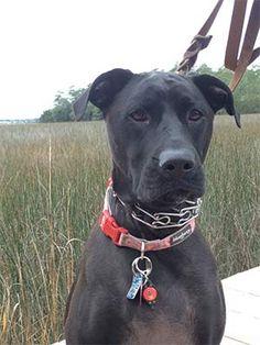 Pet Owner(s): Liz Thompson Pet: Remi (Lab Mix)