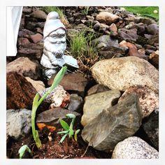My rock garden ❤️❤️