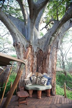 In a perfectly formed nook of a large tree.