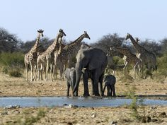 Namibia. My favourite two wild animals in the same photograph?!