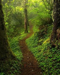 🇺🇸 Hobbit Trail 2 (Oregon coastal forest) by Jeff Hobson on 🌲 Natures Path, Beautiful Places, Beautiful Pictures, Forest Path, Magic Forest, Walk In The Woods, Amazing Nature, Pathways, Beautiful Landscapes