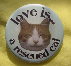 love is ... a rescued cat .... orange tabby ... by thedogcoatlady