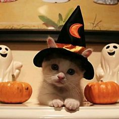 Kitty witch.  Love the little ears sticking out of the hat!