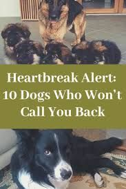 Heartbreak Alert: 10 Dogs Who Won't Call You Back All About Animals, Animals And Pets, World 2020, April 10, Your Back, Halloween 2019, Halloween Diy, Happy Halloween, Halloween Decorations