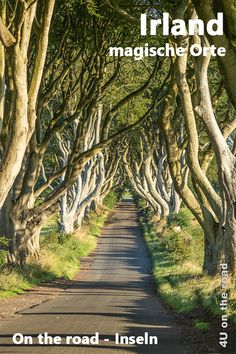 Im County Antrim entlang der Causeway Coastal Route - on the Road The Road, Dark Hedges, Coastal, England, Country Roads, Cover, Birdwatching, Getting Up Early, Scotland