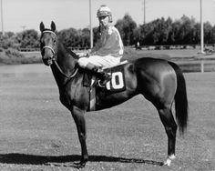 Charger Bar was a dark bay that always seemed assured of her greatness. This 1968 mare was inducted into the AQHA Hall of Fame in 2001. Learn more about the AQHA Hall of Fame inductees at http://aqha.com/Foundation/Museum/Hall-of-Fame/Hall-of-Fame-Inductees.aspx .