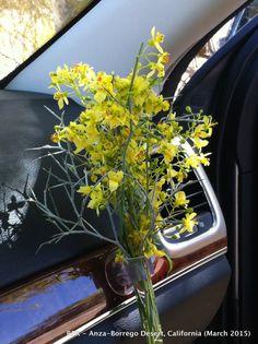 Travel Bouquet. Anza Borrego Desert. 2015
